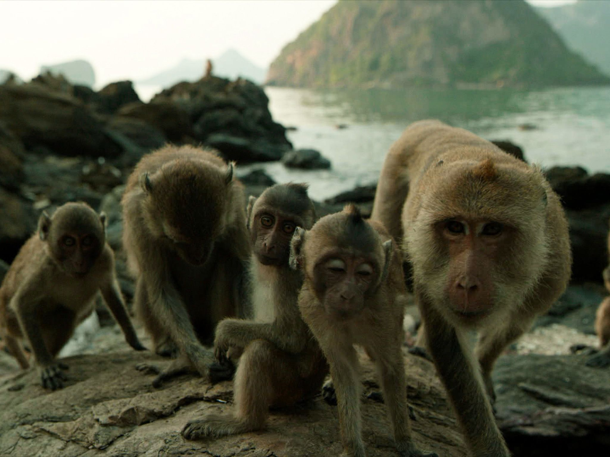 A family of macaques sit on the rocks of Koram Island, Thailand. These macaques are one of very... [Photo of the day - March 2018]