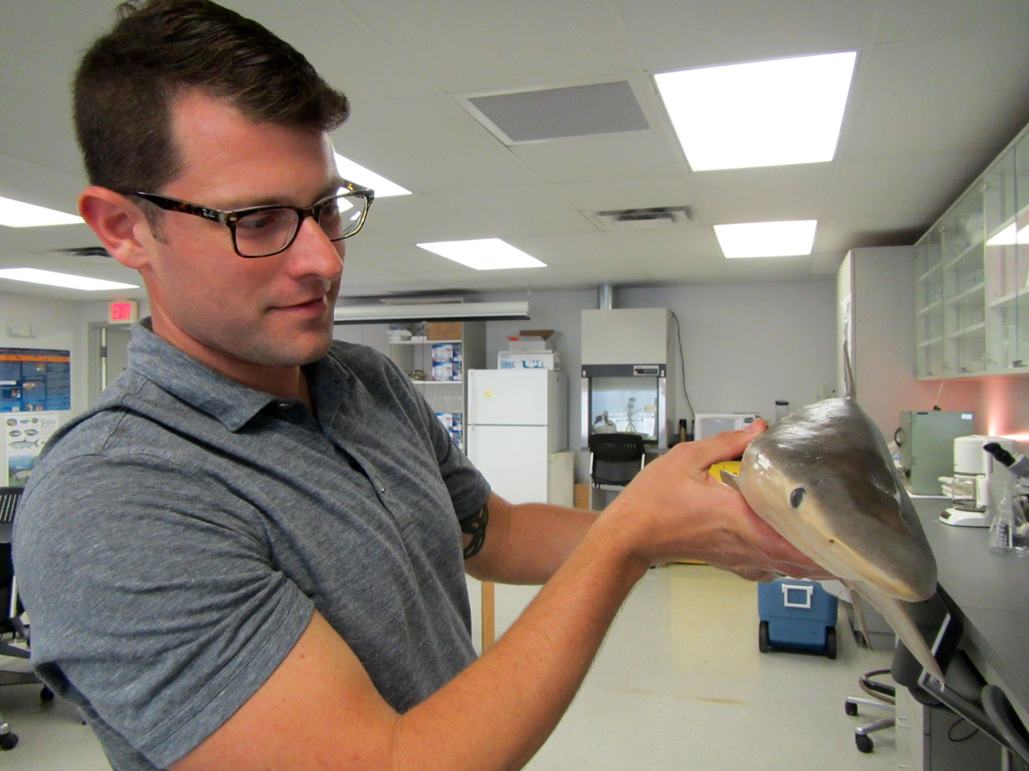 TAMPA, Fla.:  Dr. Dan Huber showing a dogfish shark at the Tampa University Shark Lab in Tampa,... [Foto del giorno - luglio 2018]