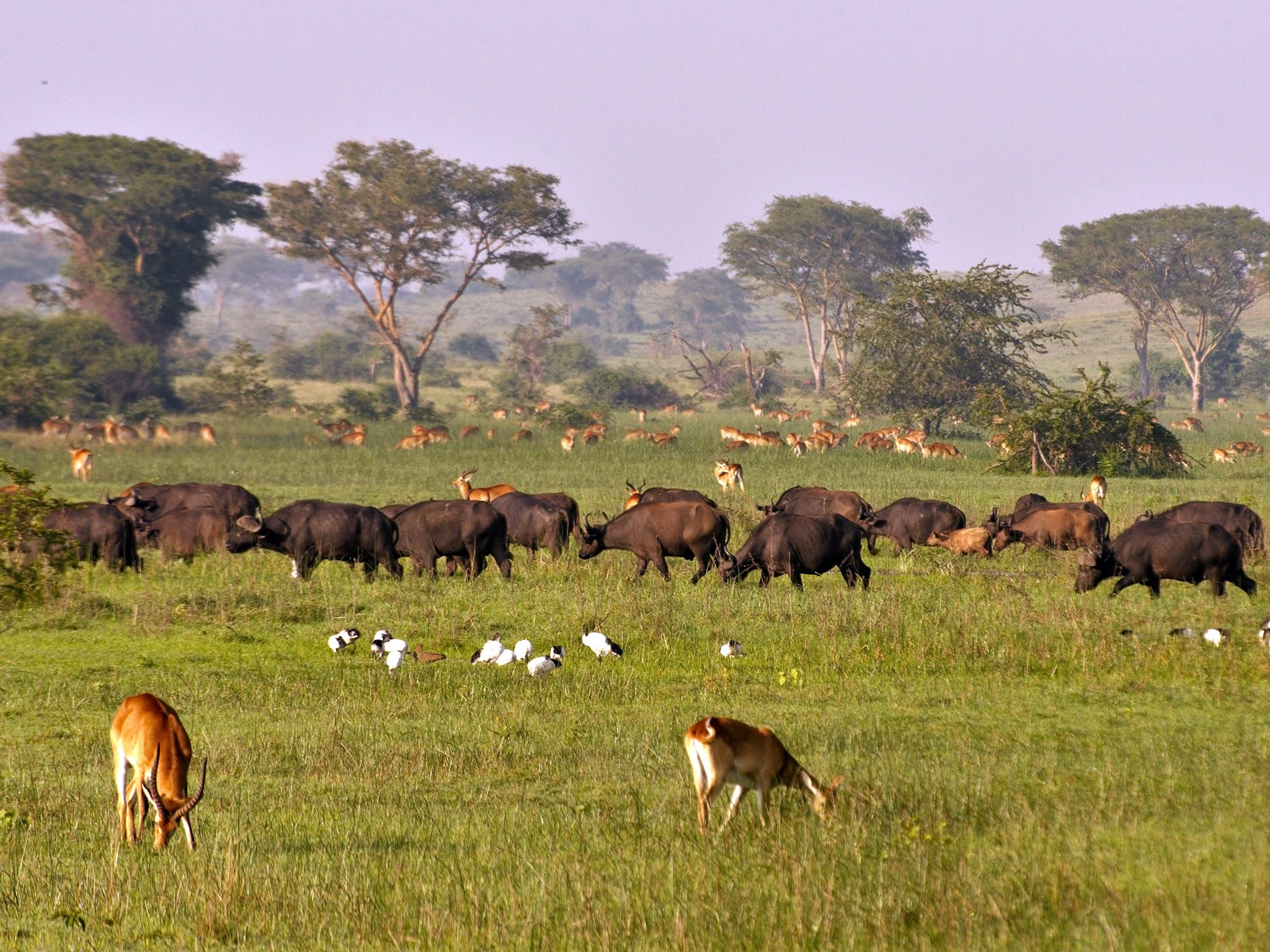 Uganda:  Queen Elisabeth National park's grassland is a paradise for animals. This image is from... [Photo of the day - September 2018]