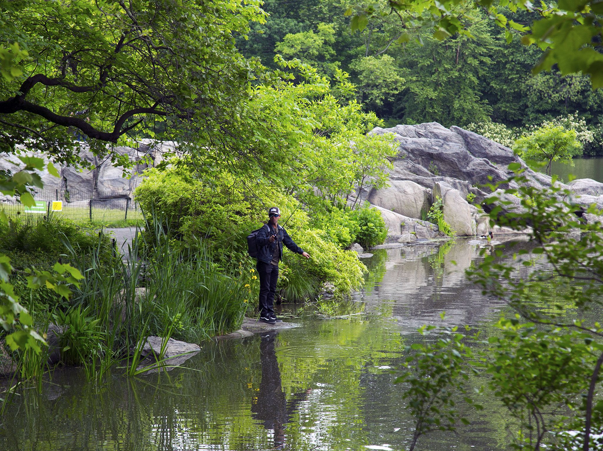 New York City, NY:  Standing on a rock fishing in Central Park, Mike Iaconelli blends in with... [Photo of the day - October 2018]