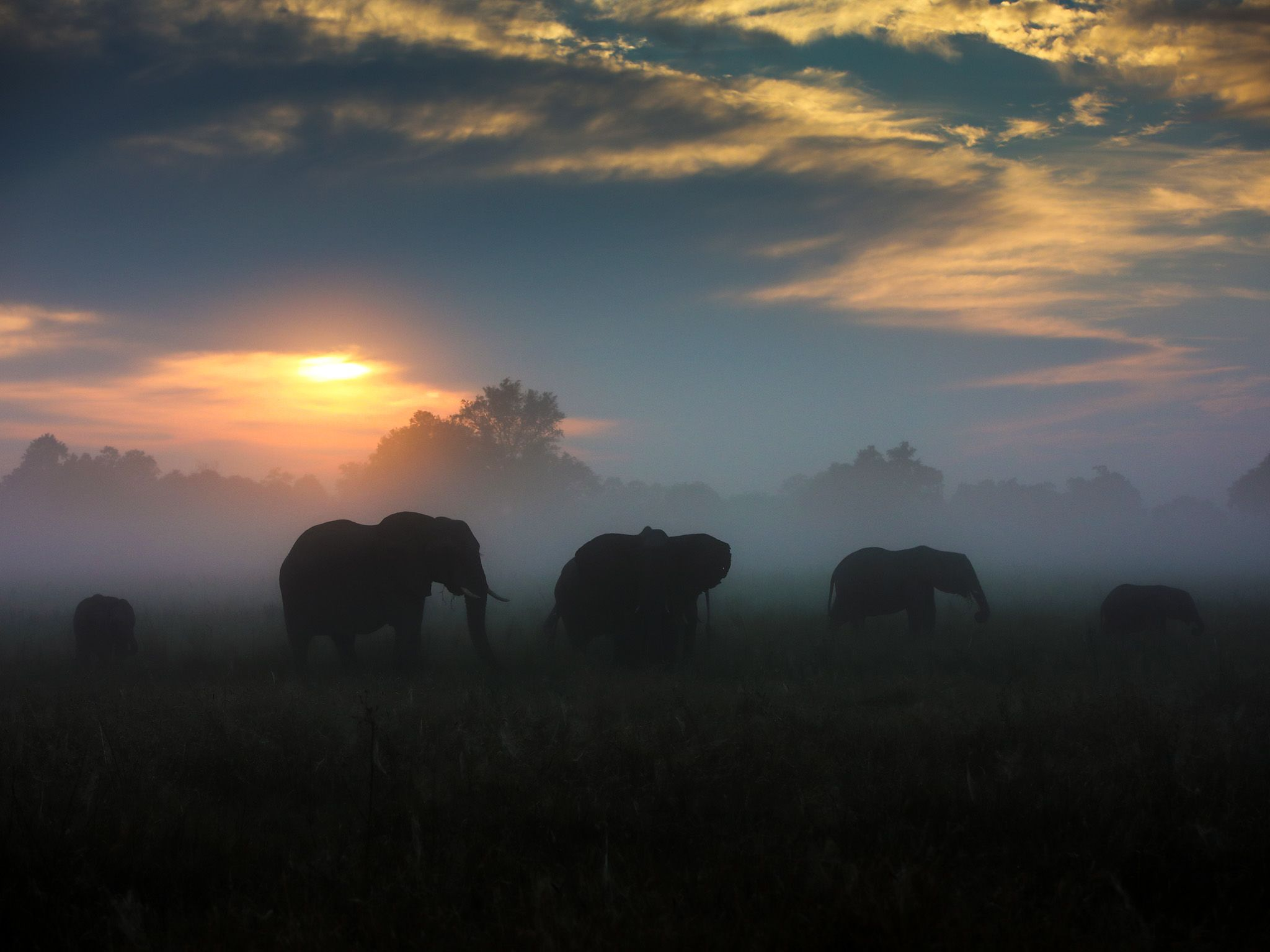 Botswana:  A herd of Elephant graze in an open floodplain surrounded by mist. The sun begins to... [Photo of the day - November 2018]