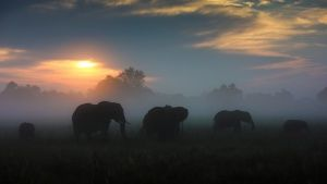 Botswana:  A herd of Elephant graze... [Photo of the day - 18 十一月 2018]