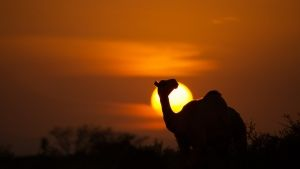 Kenya:  Sun setting behind a camel... [Photo of the day - 13 十二月 2018]