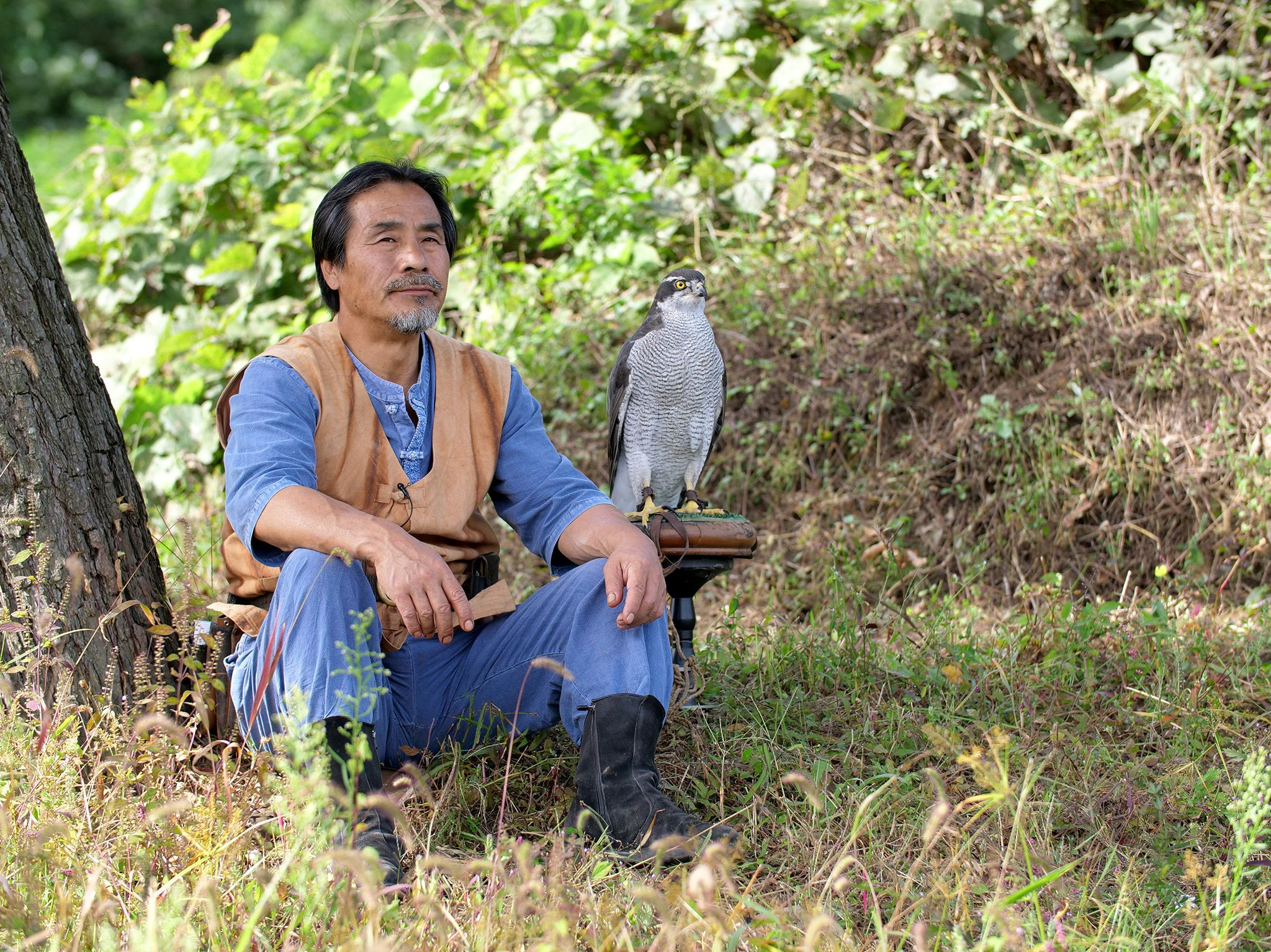 Korea:  Falconer and Goshawk sitting beneath a tree.  This image is from Wild Korea. [Photo of the day - January 2019]