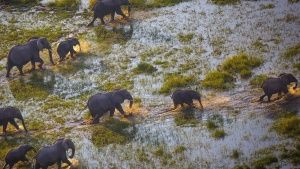 Botswana:  A group of elephants in... [Photo of the day - 24 JANUARY 2019]