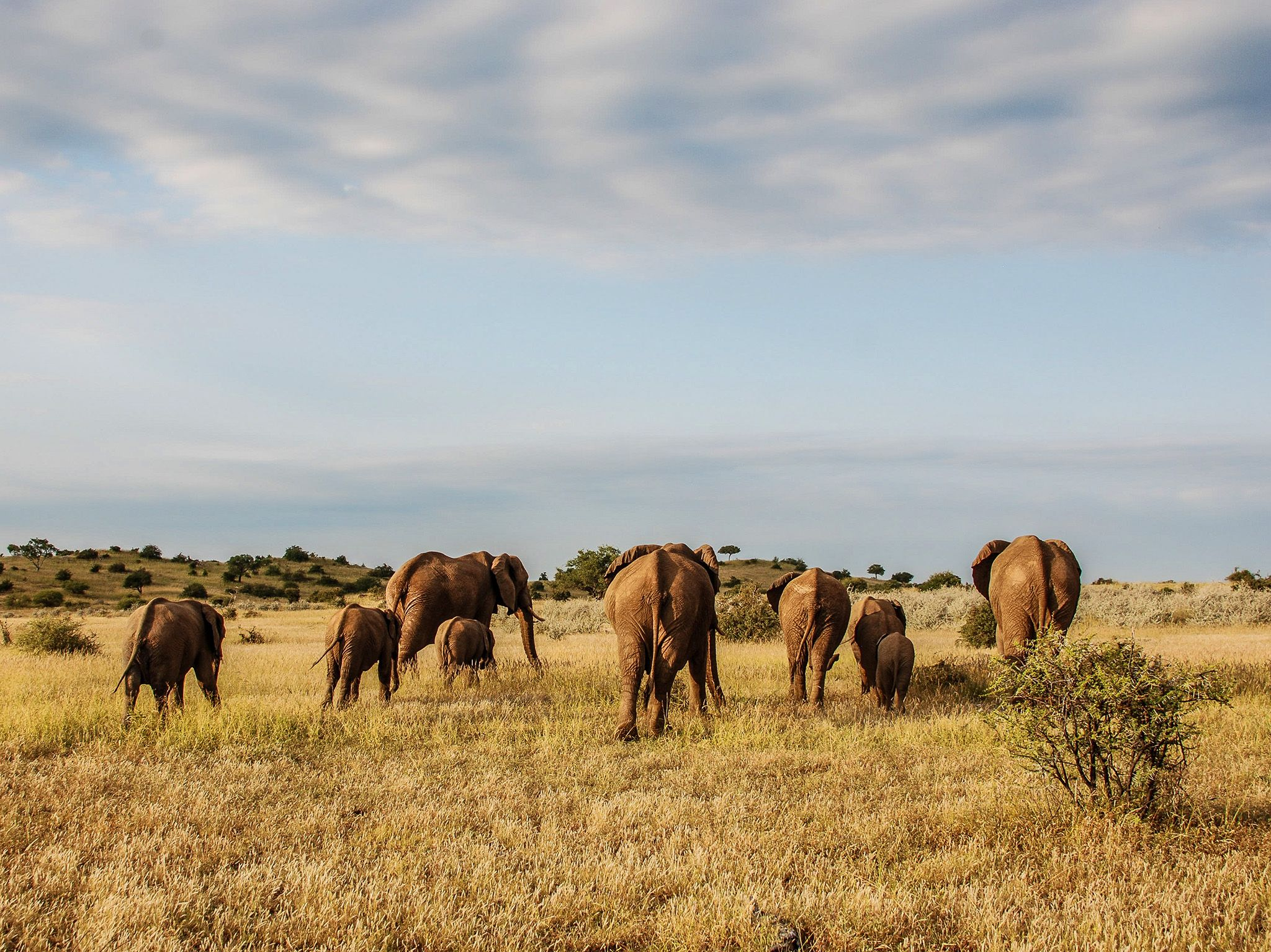 MalaMala Game Reserve, Mpumalanga, South Africa:  A herd of elephants walk. This image is from... [Photo of the day - February 2019]