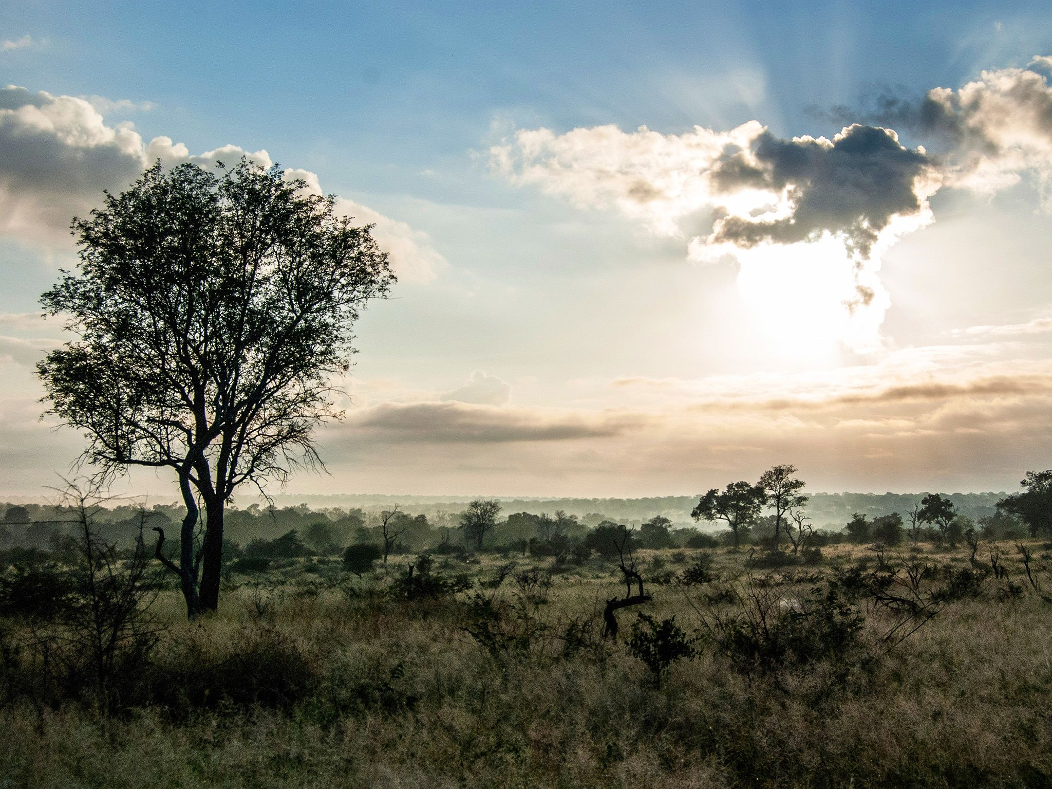MalaMala Game Reserve, Mpumalanga, South Africa:  Sunset Bushveld.  This image is from Africa's... [Photo of the day - February 2019]