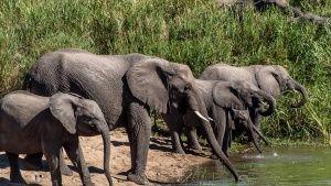 MalaMala Game Reserve, Mpumalanga,... [Photo of the day - 13 FEBRUARY 2019]
