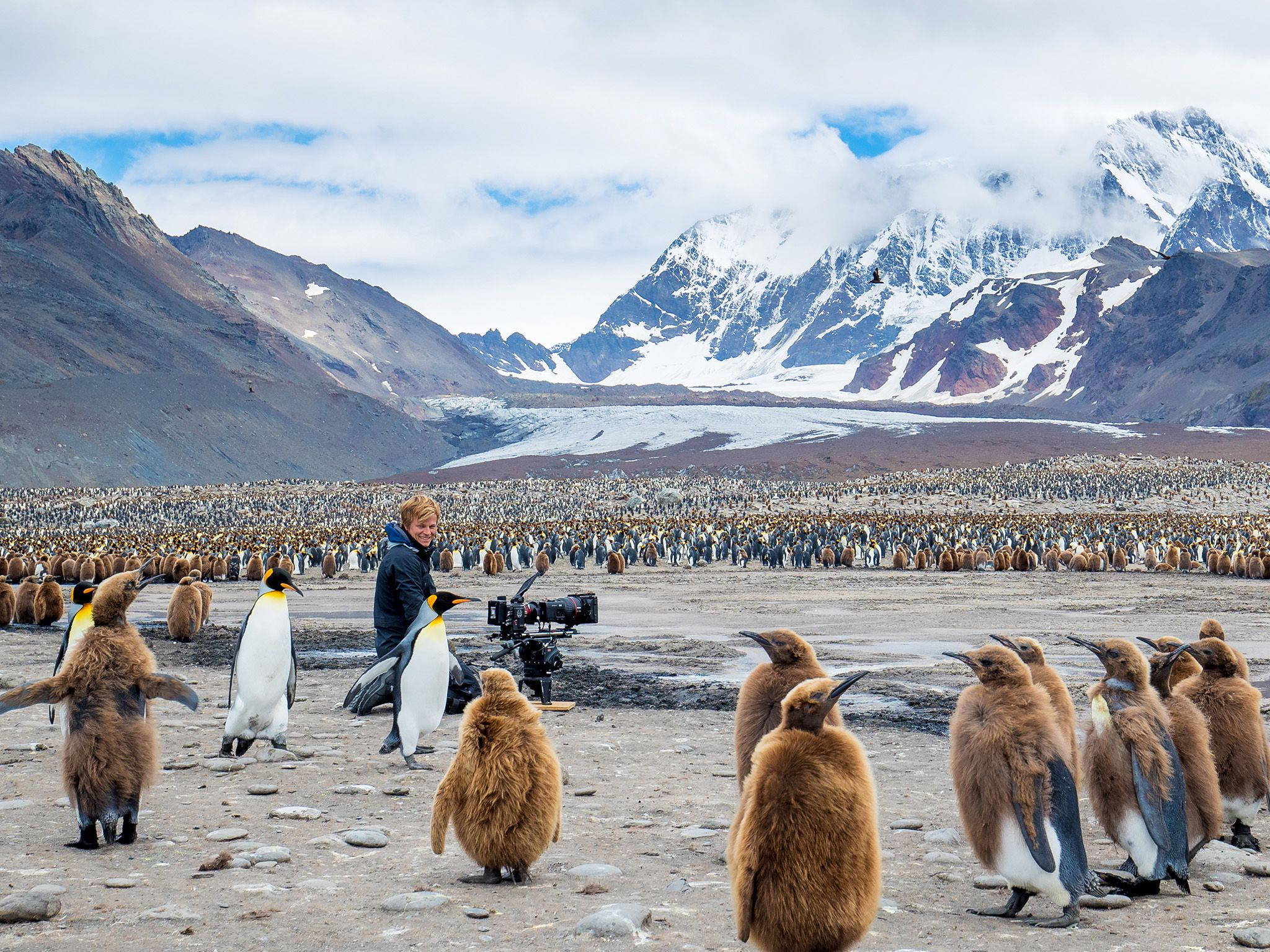 St. Andrew's Bay:  Bertie Gregory records the island's King Penguin colony amongst adults and... [Photo of the day - February 2019]