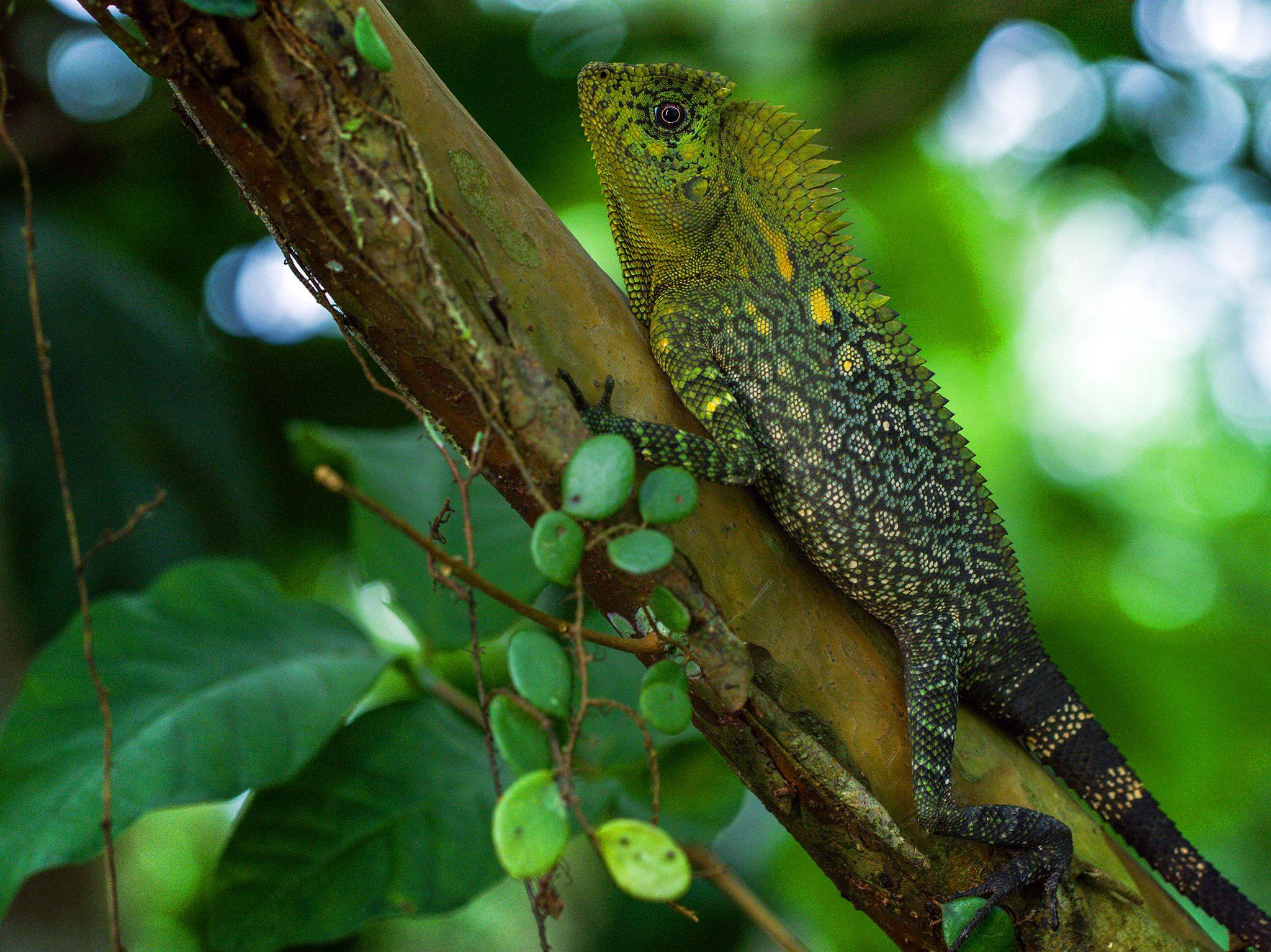 جاوا، اندونزی: مارمولکی روی تنهی درخت. | عکسی از... [Photo of the day - مارس 2019]