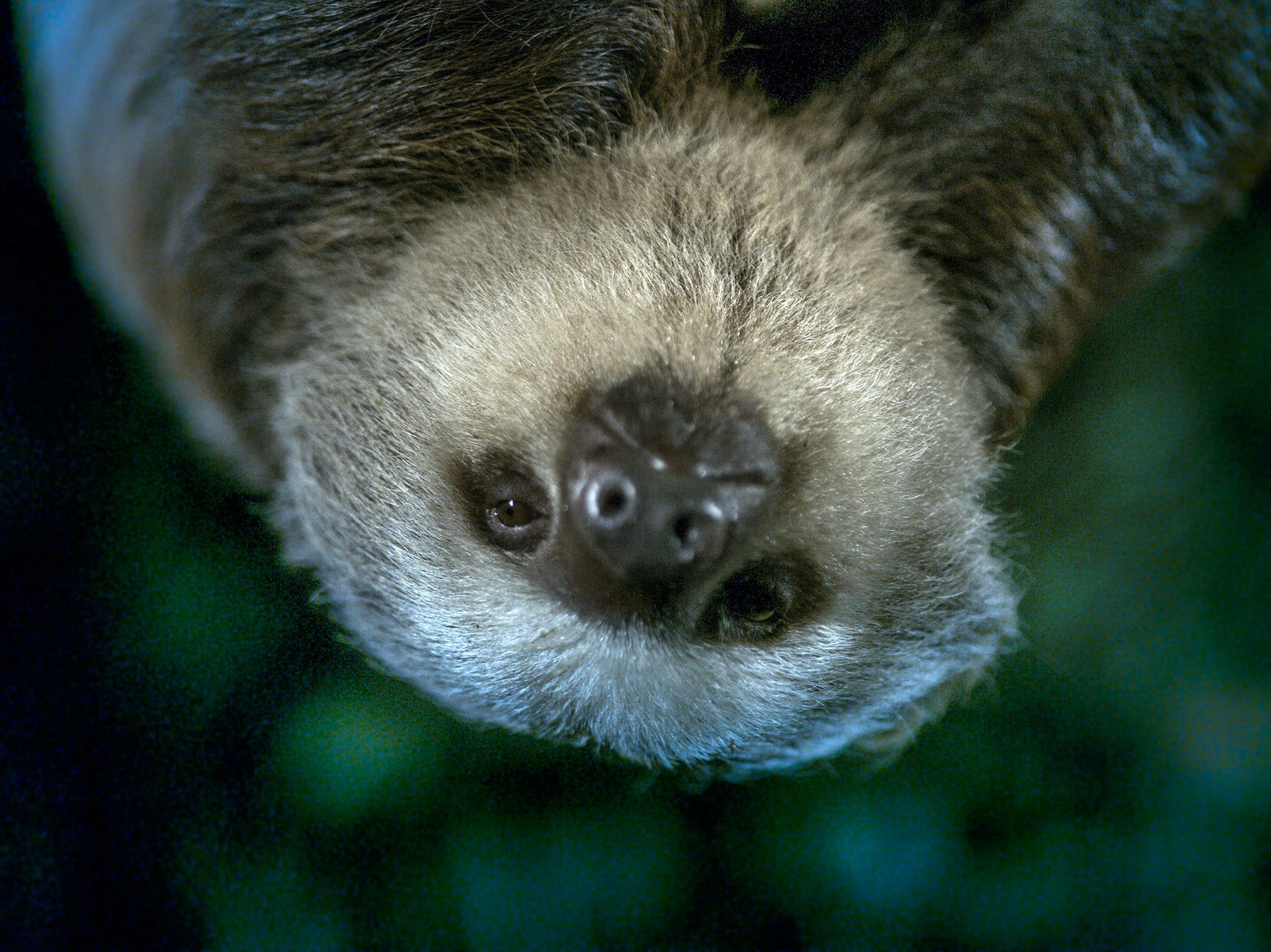 Costa Rica:  A sloth in a tree.  This image is from Dead by Dawn. [Foto del giorno - marzo 2019]