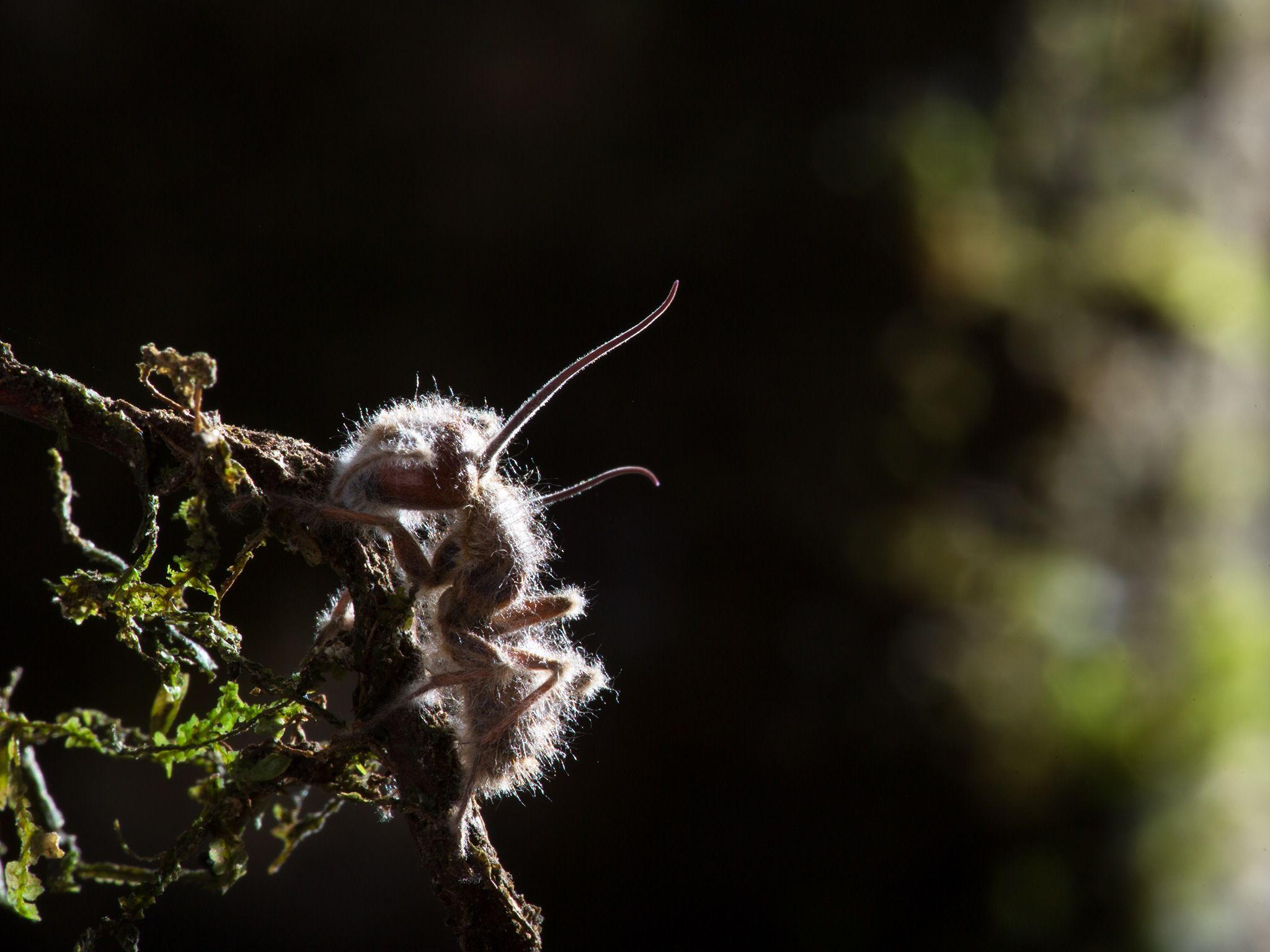 Rio Claro Reserve, Colombia:  A dead ant that have been taken over by a species of Cordyceps,... [Foto del giorno - aprile 2019]