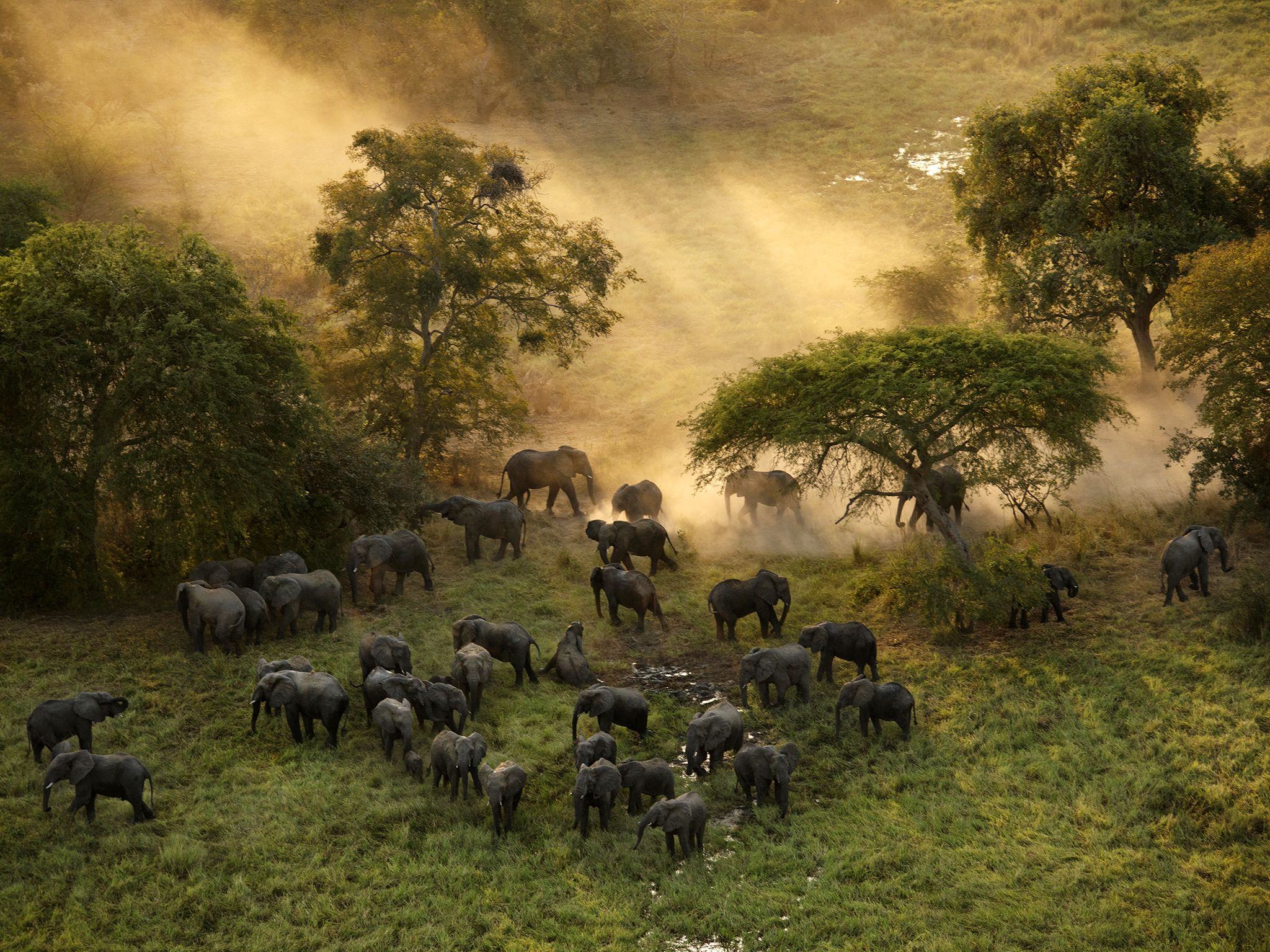 The elephant population in Zakouma National Park in Chad plummeted from approximately 4,000 in... [Photo of the day - April 2019]