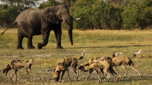 Moremi Game Reserve, Okavango Delta,... [Photo of the day - 18 ژوئن 2019]
