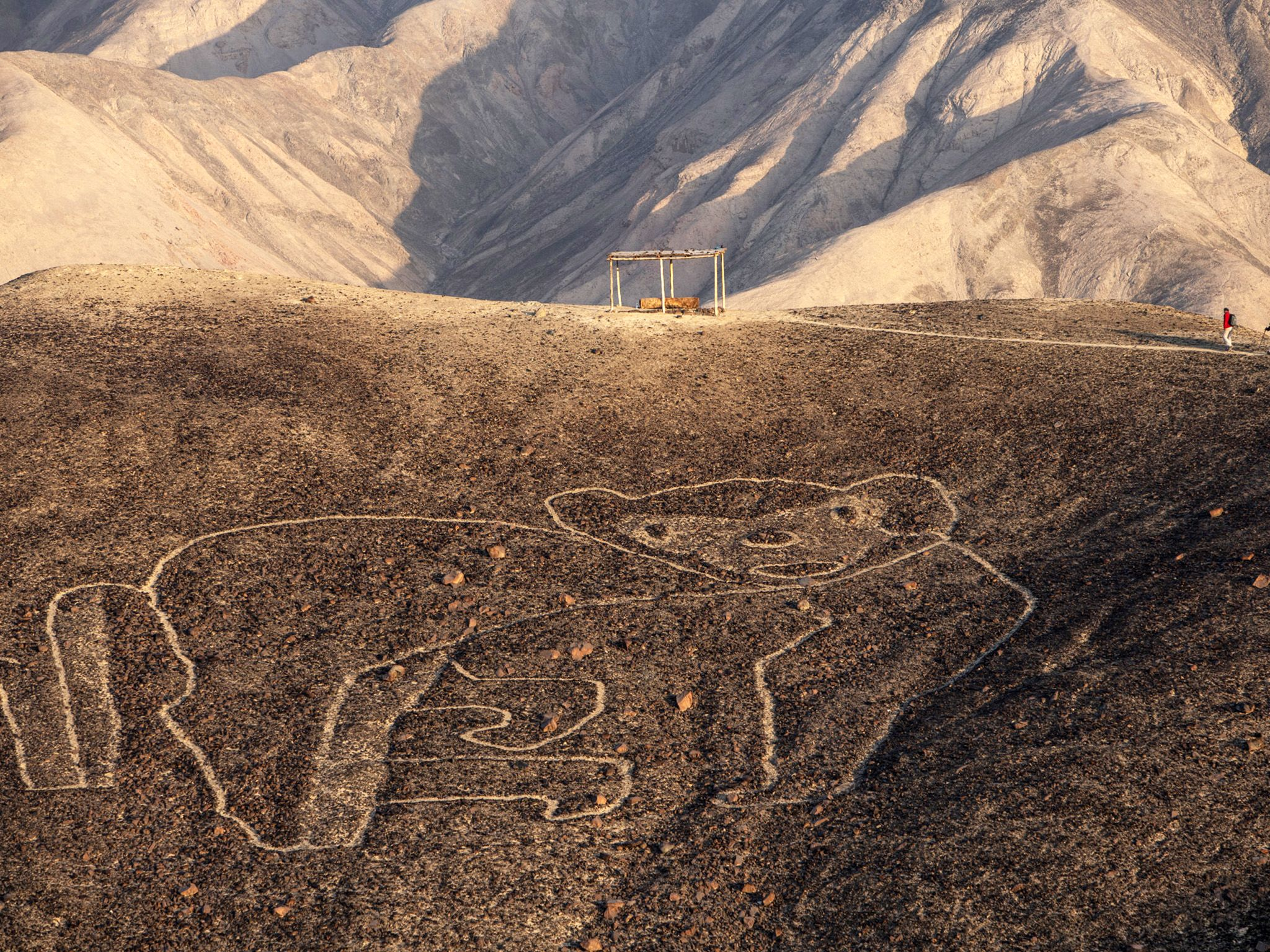 The Nasca Lines of Peru:  ancient images of animals and vast geometric designs etched in the... [Photo of the day - سپتامبر 2019]