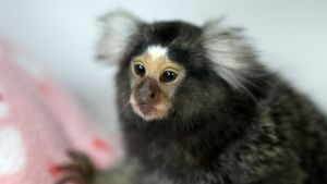 Kehlani the Marmoset waits patiently... [Photo of the day - 14 SEPTEMBER 2019]