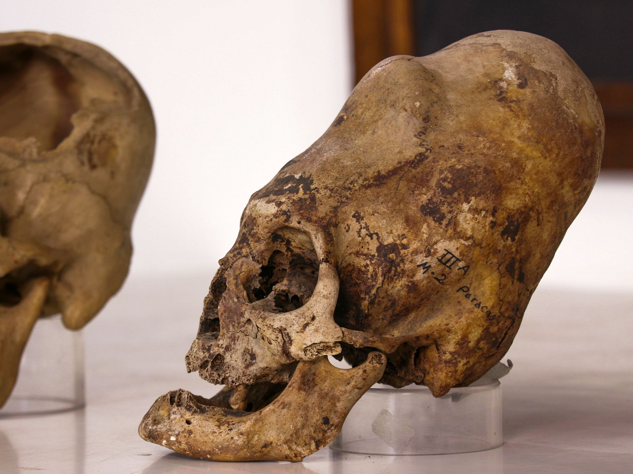 Deformed skulls, typical of the Nasca and Paracas civilisations. This image is from The Last... [Photo of the day - September 2019]