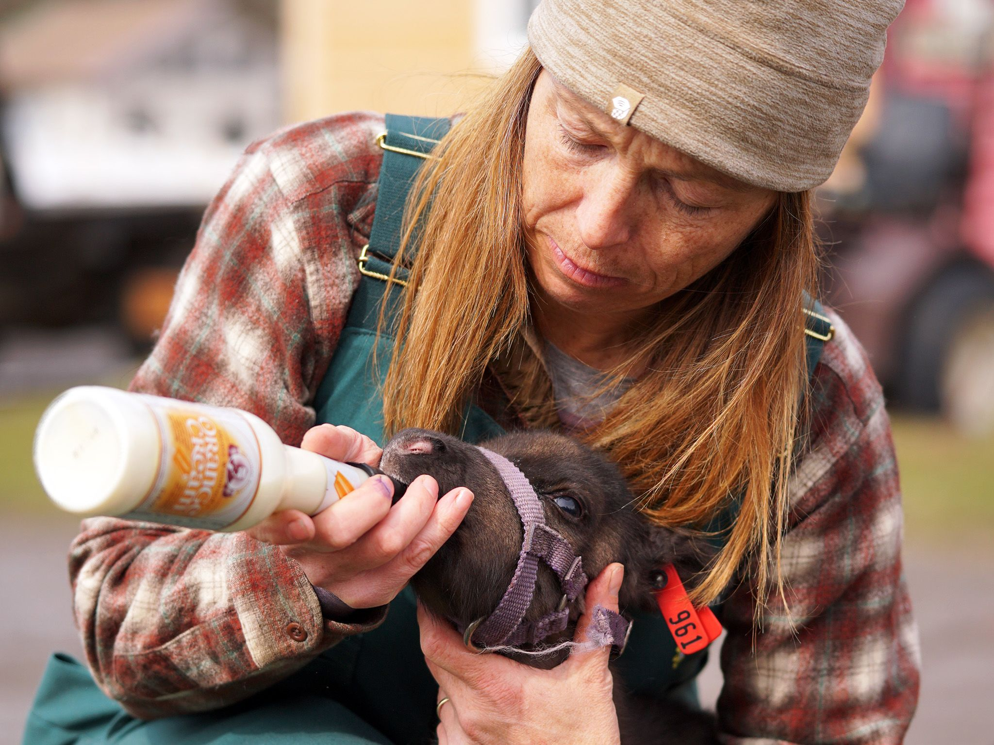 Dr. Michelle Oakley feeds a newborn reindeer calf. This image is from Dr. Oakley: Yukon Vet. [Photo of the day - October 2019]