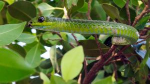 Close shot of a boomslang... [Photo of the day - 13 اکتوبر 2019]
