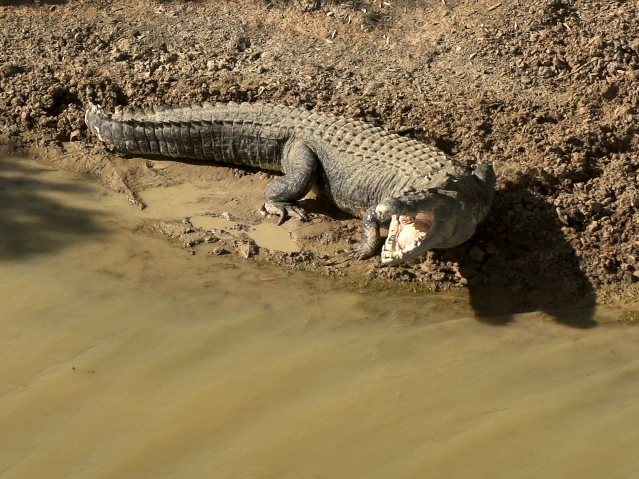 Northern Territory, Australia:  A croc shows its teeth. This image is from Monster Croc Wrangler. [Photo of the day - November 2019]