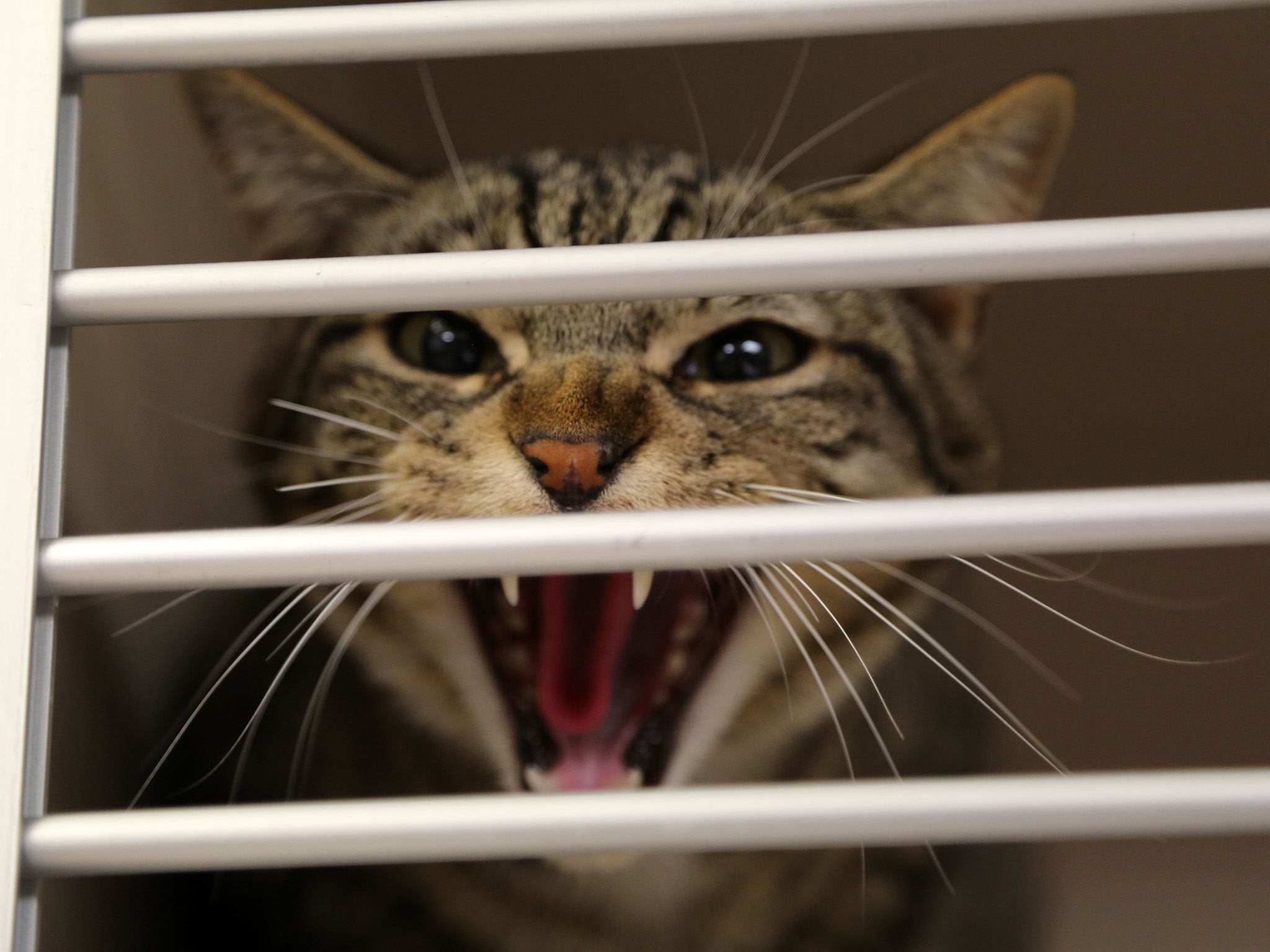 Pueblo, CO:  Fanny the cat is a little upset after being rescued from a swamp cooler. This image... [Photo of the day - November 2019]