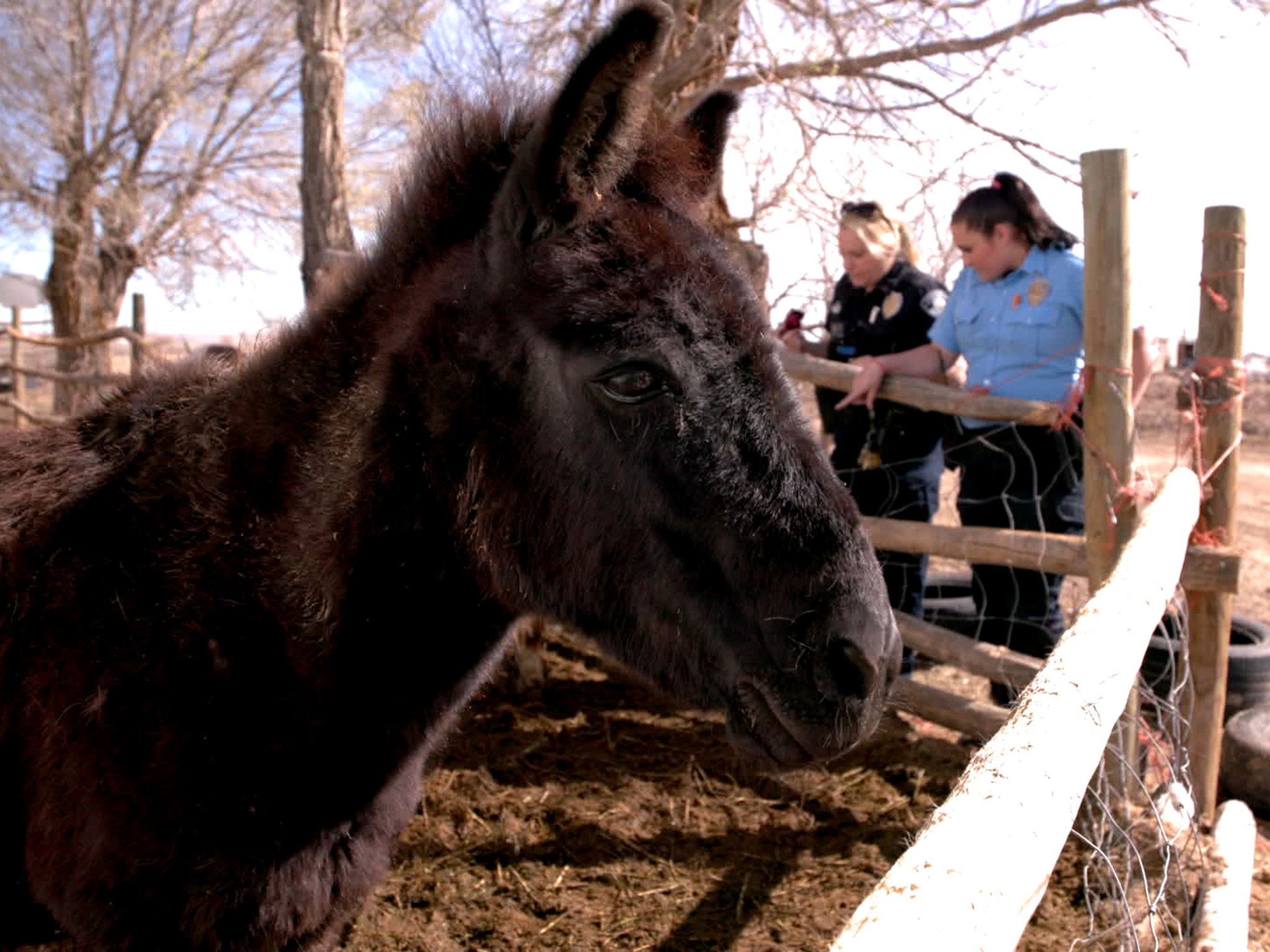 Boone, CO:  Corporal Vicki Cheney and Officer Jordyn DeCarlo check up on neglected horses at a... [Photo of the day - November 2019]