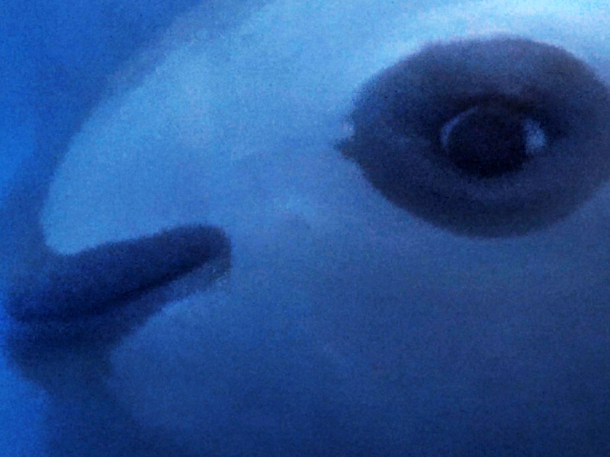 The Vaquita underwater, smallest and most elusive whale on earth. This image is from Sea of Shadows. [Photo of the day - November 2019]