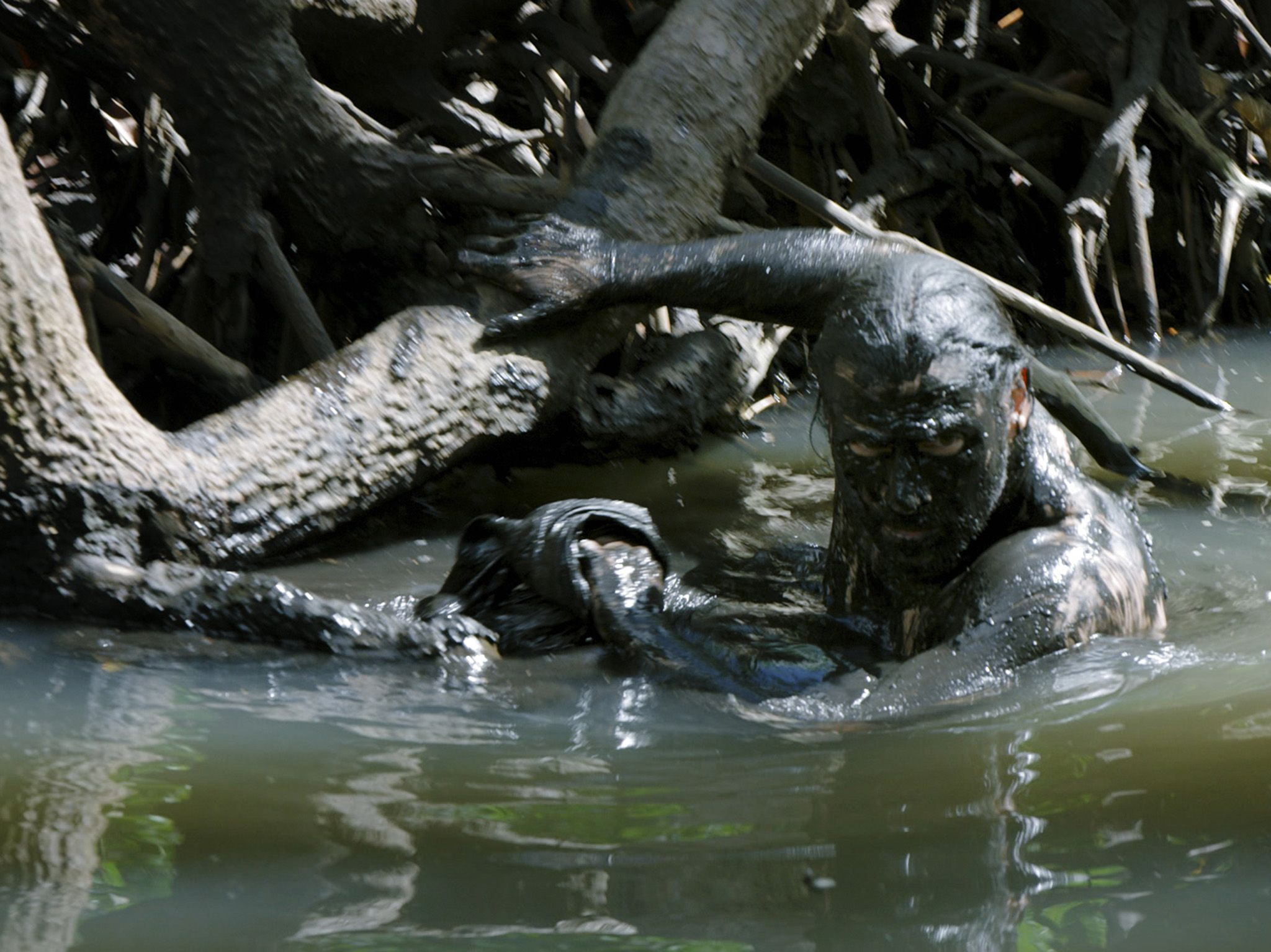 Hazen Audel, covered in mud for camouflage, enters the water of a mangrove swamp. This image is... [Photo of the day - November 2019]