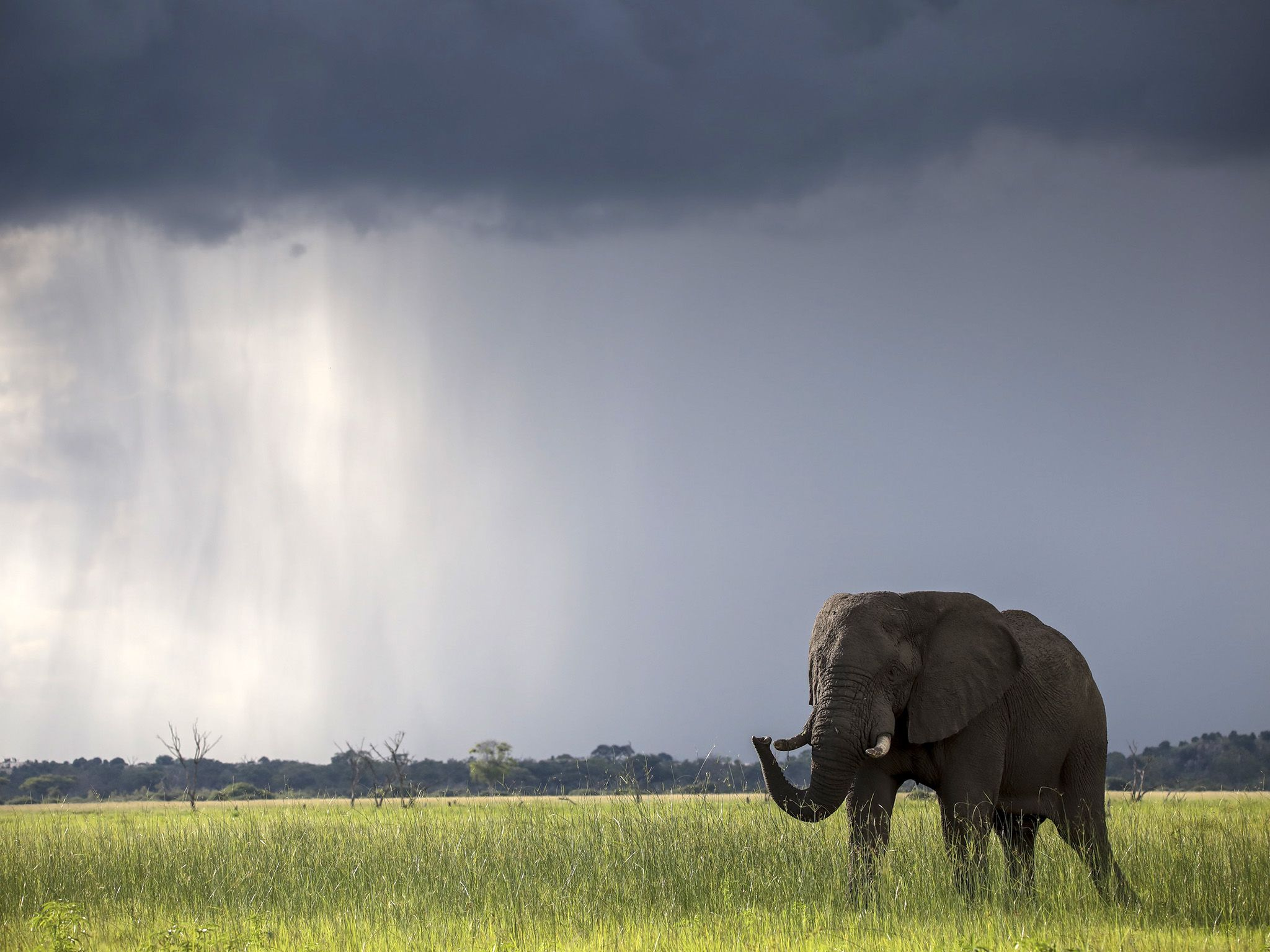 Botswana: An elephant.  This image is from Africa's Deadliest. [Photo of the day - January 2020]