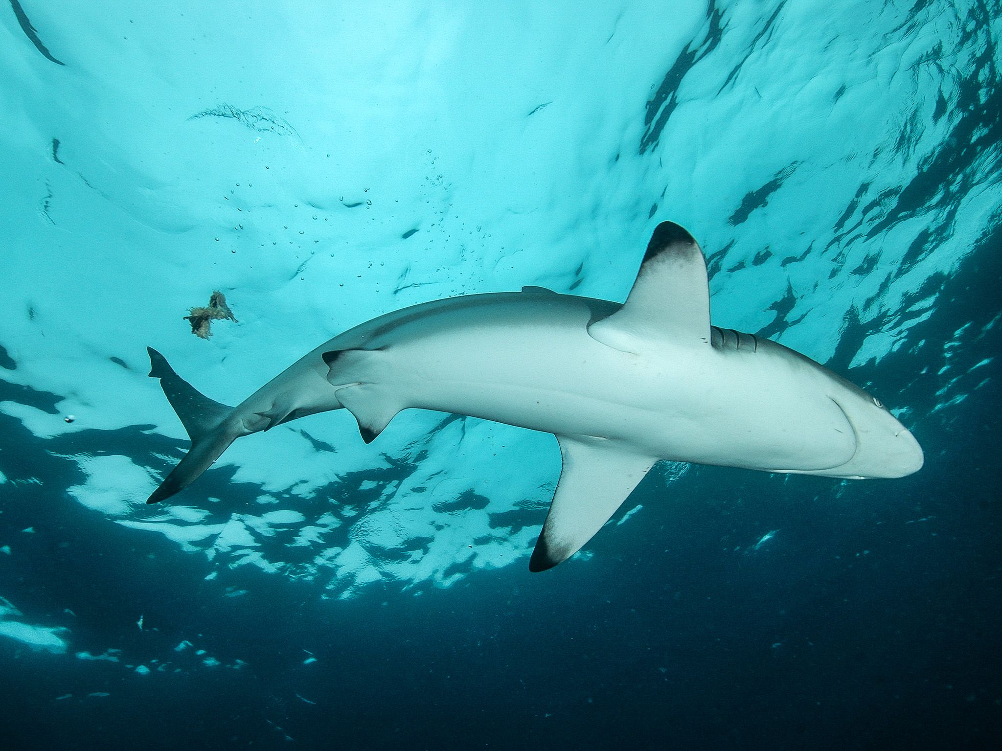 Blacktip Sharks hunting.  This image is from Africa's Deadliest. [Photo of the day - January 2020]