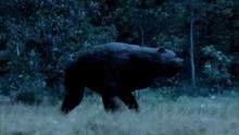 Evolutions: Bear Necessities show