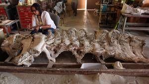 Prehistoric Predators Images photo
