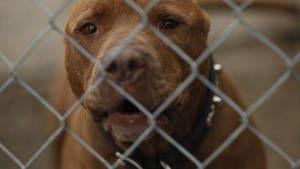 Rescued Animals photo