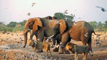 Elephants and Lions show