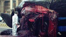 The Whale That Blew Up show