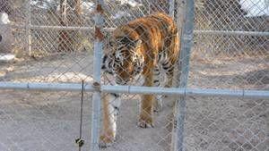 Zoo animals photo