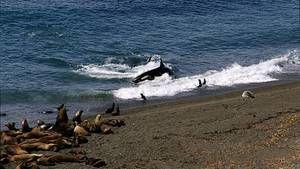 Orca Killing School images photo