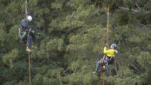 World's Tallest Tree show