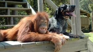 Animal love photo