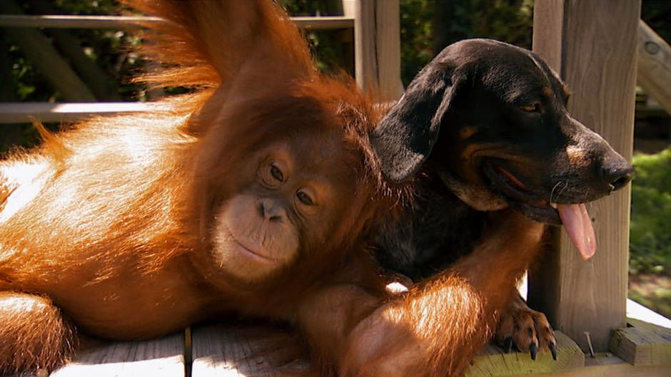 Image of: National Geographic Animal Love Text This Blog Animal Love Photos Unlikely Animal Friends National Geographic
