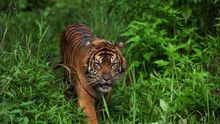 World's Deadliest Animals show