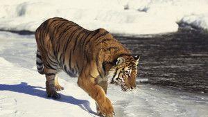 World's Deadliest Animals photo