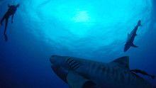 Underwater life show