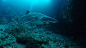 Underwater life photo