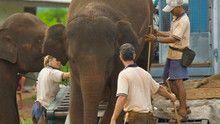 Flight Of The Elephants show