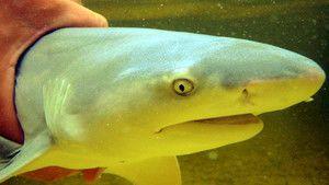 Extreme Animals - Shark and Wasp photo