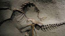 Dino Death Trap show