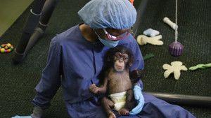 Human Ape photo