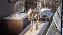 Prehistoric Predators Images show