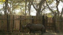 Rhino Rescue show